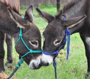 Thandi & Unathi - Donkeys